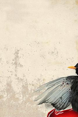 Dead bird - p4500672 by Hanka Steidle