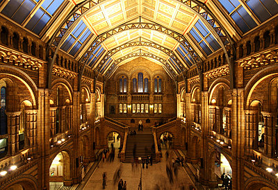 Atrium of the National History Museum in London - p6521578 by David Bank