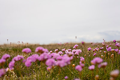Wild flowers - p1095m934772 by nika