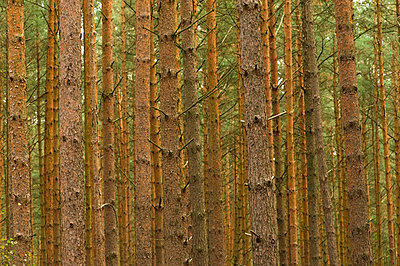 Forest - p1781066 by owi