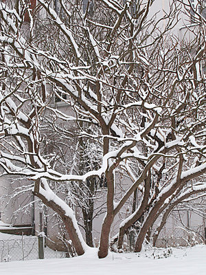 Snow-covered tree - p4902801 by Jan Mammey