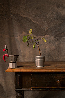 Espresso pot and lemon tree placed on sideboard - p947m2178578 by Cristopher Civitillo