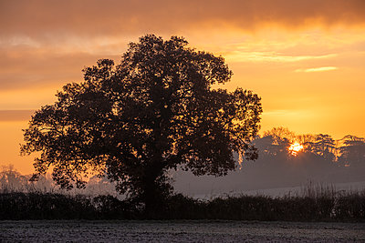 A large tree at sunrise - p1057m2149475 by Stephen Shepherd