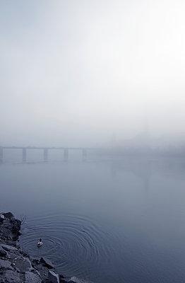 Ente im Nebel - p1443m1503268 von SIMON SPITZNAGEL