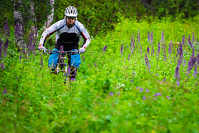 Mountain biker riding through a field of fireweed in Lappland, Sweden. - p343m1090342 by Elias Kunosson