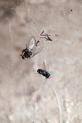 Zwei Fliegen im Spinnennetz - p993m758836 von Sara Foerster
