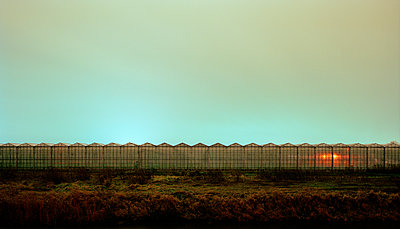 Greenhouse at evening - p1132m925591 by Mischa Keijser