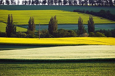 Landscape near Bennhausen in the Palatinate - p2687571 by Rudi Sebastian