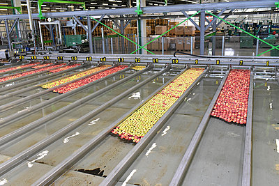 Conveyor belt with apples in water - p300m2144125 by lyzs