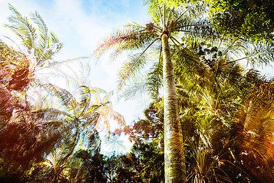 Sydney - p416m1498005 von Jörg Dickmann Photography