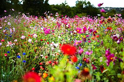 Blumenwiese Provence - p8870006 von Christian Kuhn