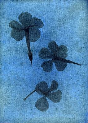 Gepresste Blumen - p945m2177734 von aurelia frey
