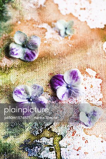 Hortensienblüten auf Aquarellfarben    - p450m1574829 von Hanka Steidle