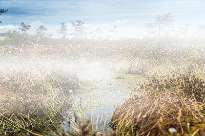 Germany, Fladungen, Black Moor, swamp landscape in fog - p300m1460027 by Frank Röder