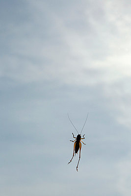 A cricket on a window, low angle view - p301m744390f by Maria Jauregui Ponte