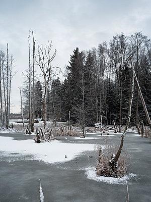 Schneebedeckter Wald und Teich  - p370m2020683 von David Hartfiel