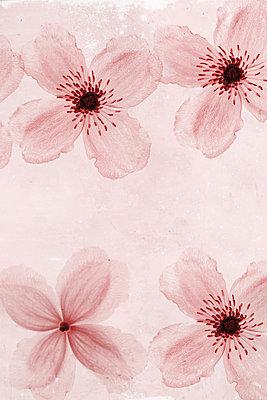 Zarte Blüten - p450m1030708 von Hanka Steidle