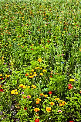 Blumenwiese - p741m892692 von Christof Mattes