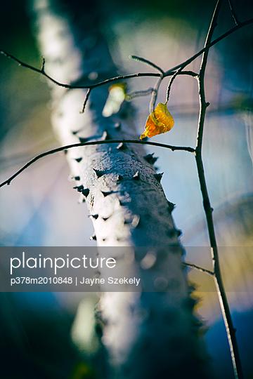p378m2010848 von Jayne Szekely