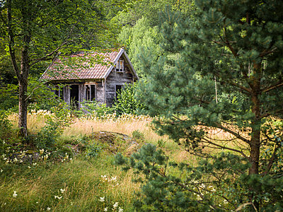 Wooden hut in forest - p312m1131431f by Stefan Isaksson