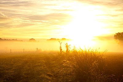 Ein nebeliger Oktobermorgen in Bayern - p533m2044339 von Böhm Monika