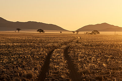 Track at sunset in the Namib Desert, Namibia, Africa - p871m1067079f by Neil Emmerson