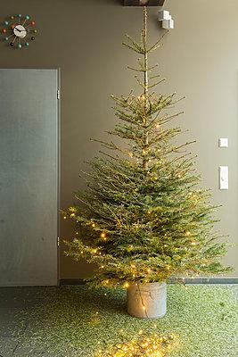 Kleiner vertrockneter Weihnachtsbaum mit Lichterkette ohne Schmuck. - p948m2014765 von Sibylle Pietrek