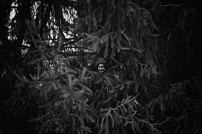Boy in Evergreen Tree - p1169m955949 by Tytia Habing