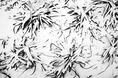 Schnee - p1411m1559548 von Florent Drillon