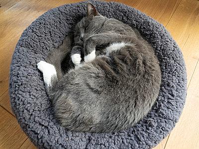 Sleeping cat - p824m2116923 by jochen leisinger
