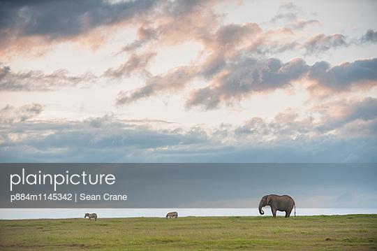 p884m1145342 von Sean Crane