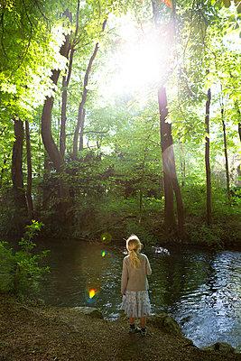 Summer forest - p454m2192402 by Lubitz + Dorner
