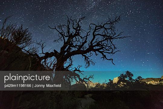 p429m1198166 von Jonny Maxfield