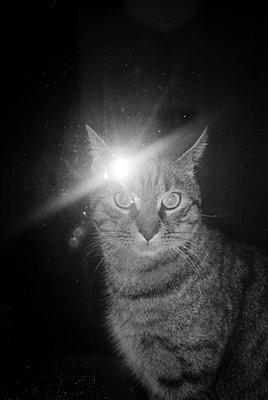 Katze angeblitzt - p1055m951396 von Joseph Charroy