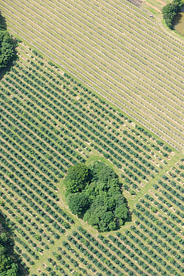 Orchard aerial view - p1048m1069192 by Mark Wagner