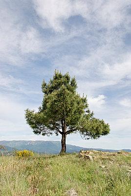 Einamer Baum - p260m2026328 von Frank Dan Hofacker