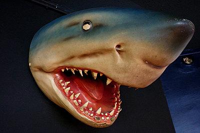 Weißer Hai - p567m1530394 von Gaëlle Magder