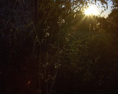 Sonnenstrahlen erhellen Buschwerk - p945m1196297 von aurelia frey