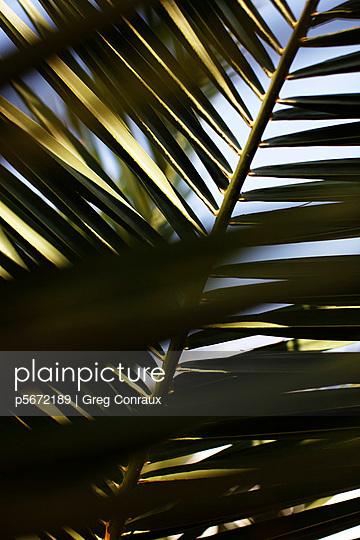 geometrical leaves  - p5672189 by Greg Conraux