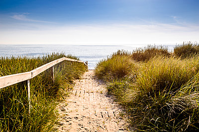 Germany, Schleswig-Holstein, Sylt, path through dunes - p300m1587861 von Ega Birk