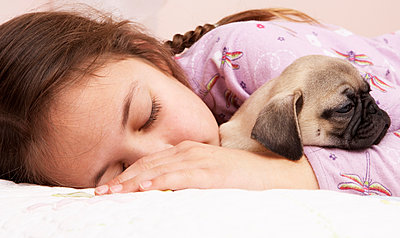 Mixed race girl sleeping with pug - p555m1420109 by Tanya Constantine