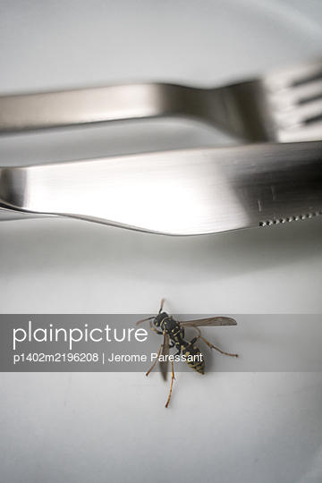 Wasp on plate - p1402m2196208 by Jerome Paressant