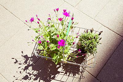 Gartenpflanzen - p432m1132472 von mia takahara