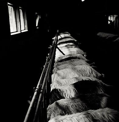 Dairy Farm - p6300096 by Suzette Bross
