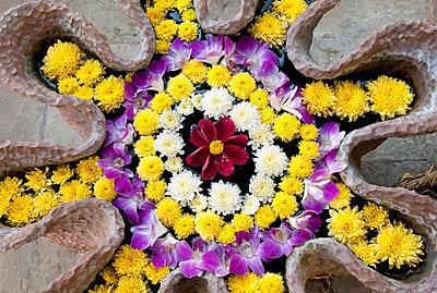 Asian Composition of Flowers  - p1307m2100392 by Agnès Deschamps