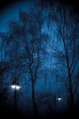 Im Nebel - p220m1108669 von Kai Jabs