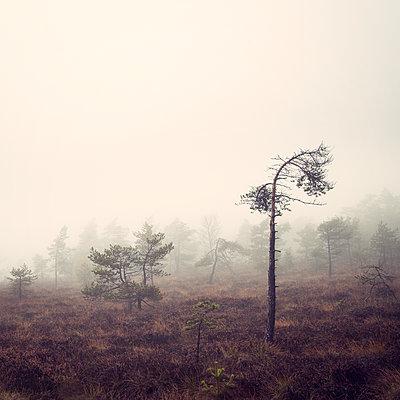 Nebelmoor - p992m1093033 von Carmen Spitznagel