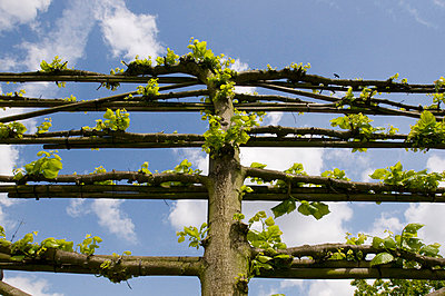 Vine branch - p1781113 by owi