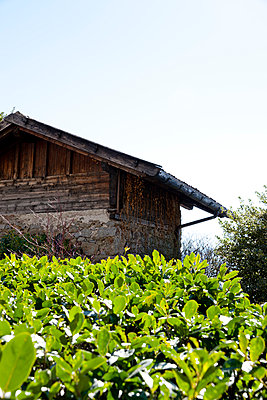 Barn - p248m898654 by BY