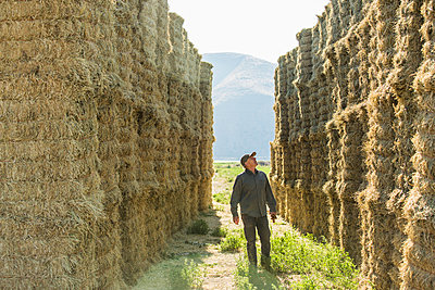 Caucasian farmer checking stacks of hay - p555m1303732 by Steve Smith